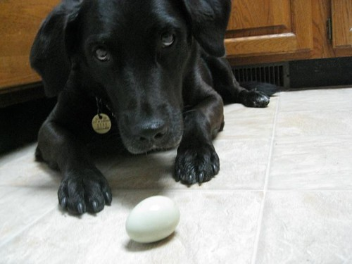Penny poses with egg