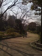 Asakusa dog walker