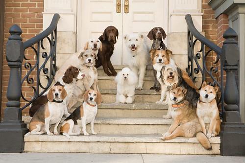 Hotel para perros. por ti.