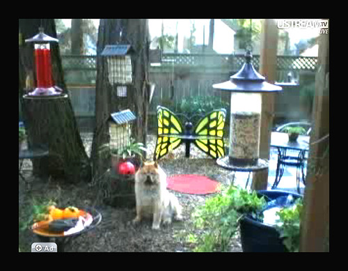 LILLIAN IN A SCREEN SHOT FROM THE LIVE GARDEN CAM