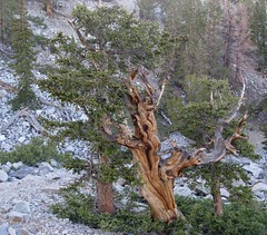 Leaving the Bristlecone Pines