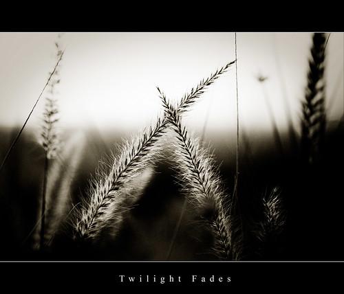 Twilight Fades