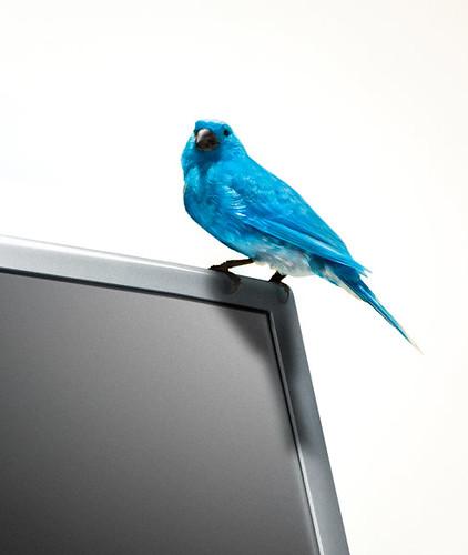 El pájaro se escapó Twitter