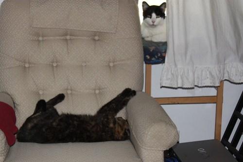 Lazy Kit