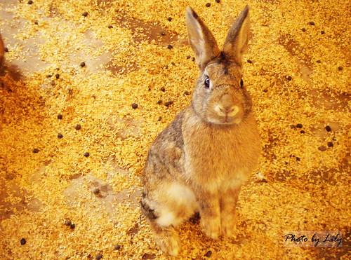 站起來看我的可愛小兔兔。