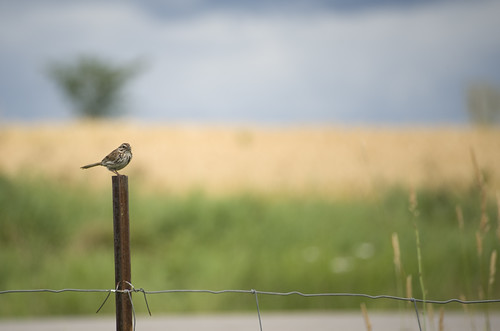 Bird on a post.