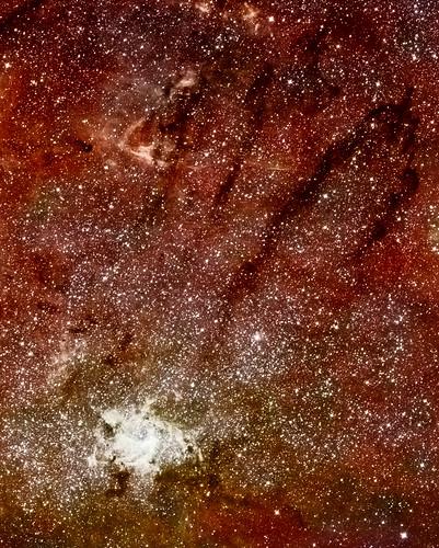 Celestial Jackrabbit