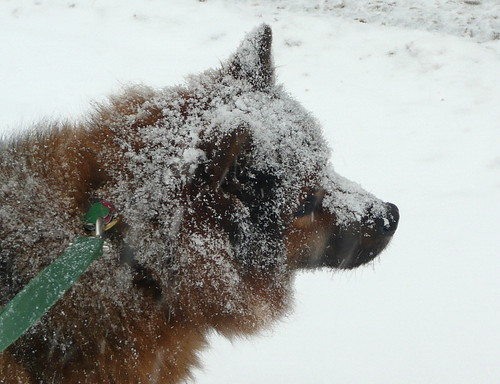 The Abominable Snow-Dog!