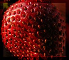 SamikRC - Sweet Pimples.... (Flickr)