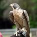 Woodland Park Zoo Seattle 099