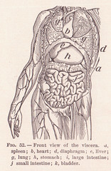 View of Viscera Page 82