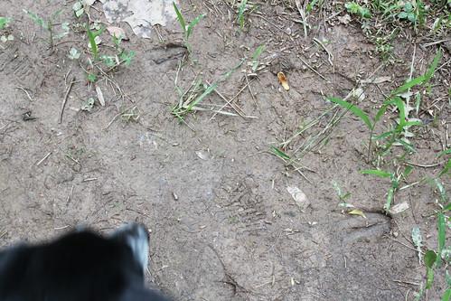 Bull Run Occoquan Trail - Deer Tracks in Mud