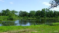 Pond on Stallion Park Place