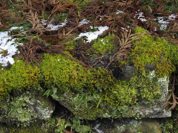 石見銀山 35