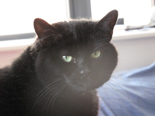 Flosscat