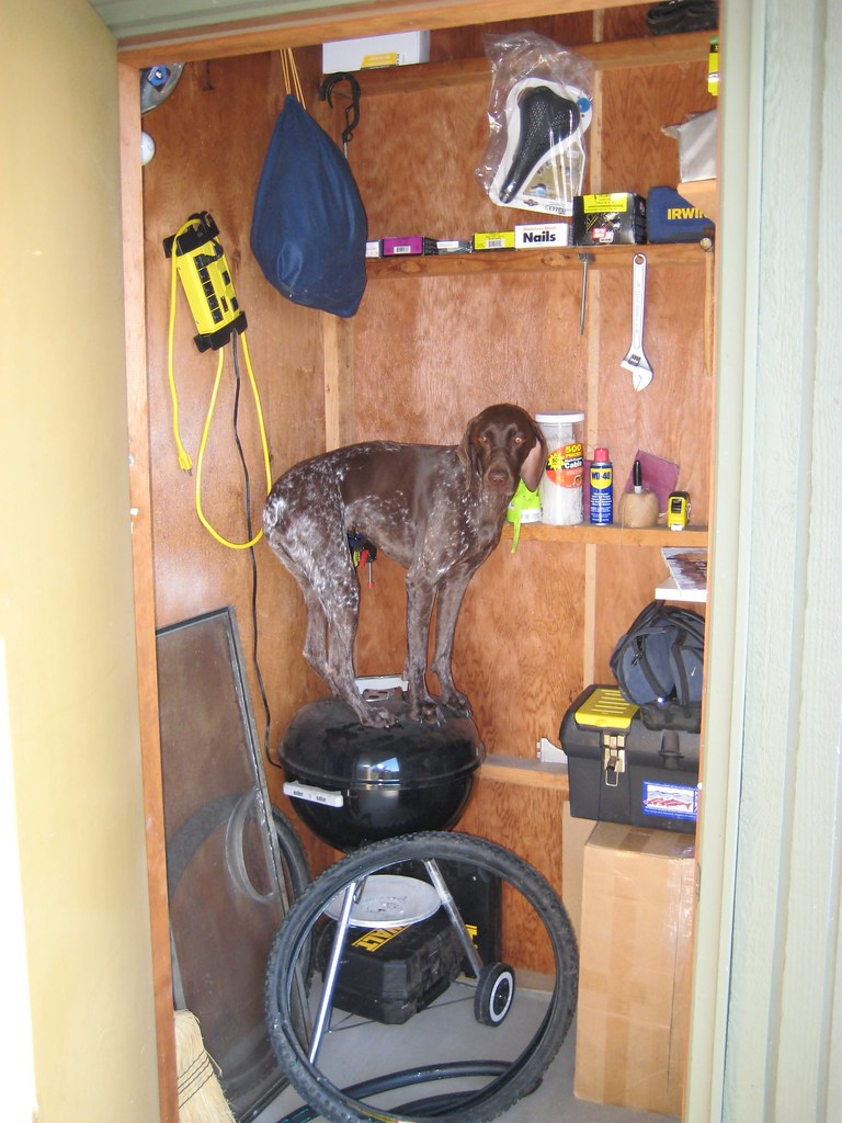 Bailey in the shed