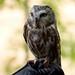 Woodland Park Zoo Seattle 065