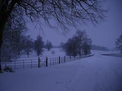 Gorhambury park in winter