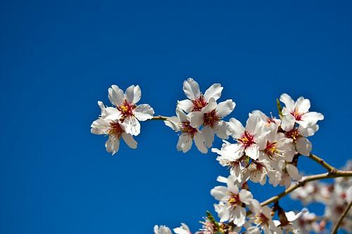 Primavera a la japonesa