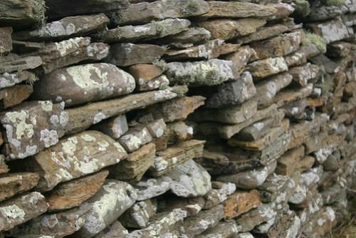 lichen-wall-2