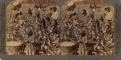 Capitalism: Slavery  (2006)
