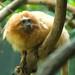 Woodland Park Zoo Seattle 010
