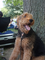 A member of the canine community seen enjoying the food, music and nature at Goodale Park.