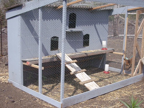 NEWER CHICKEN COOP