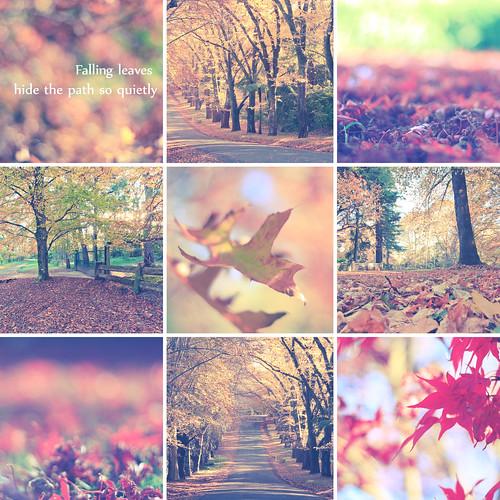 Autumn at Mt Wilson