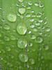 rain_on_leaf