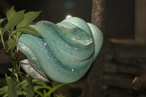 Python 2.6.1