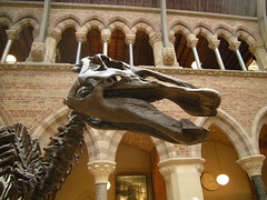 Museum of Natural History 11