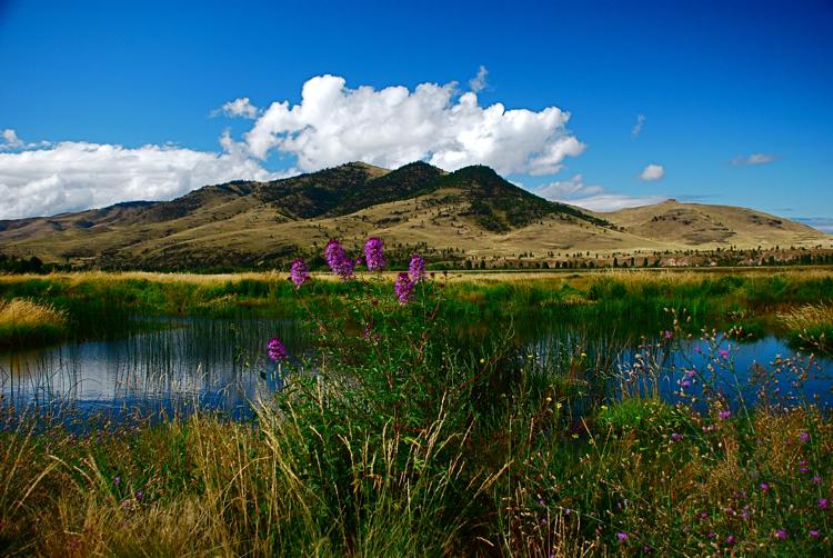 Western Montana summer.