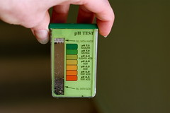 pH Test of Soil in Flowerbeds