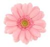 ist1_2165515-pink-gerbera