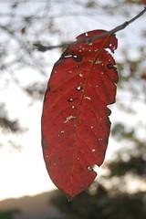 one more leaf
