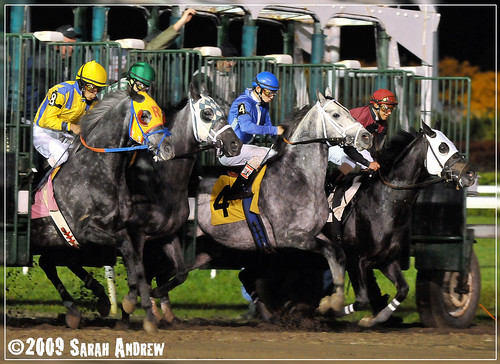 The Grey Ghost Starter Handicap- a Halloween race for grey horses at the Meadowlands