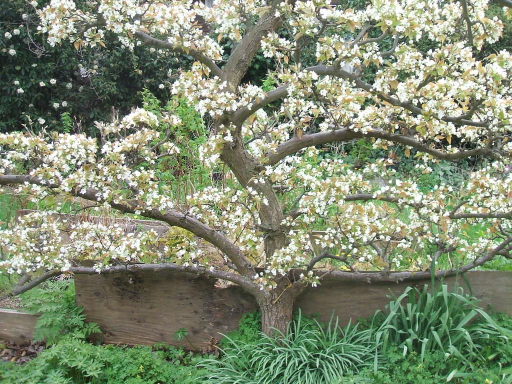 Sculptural Fruit Tree