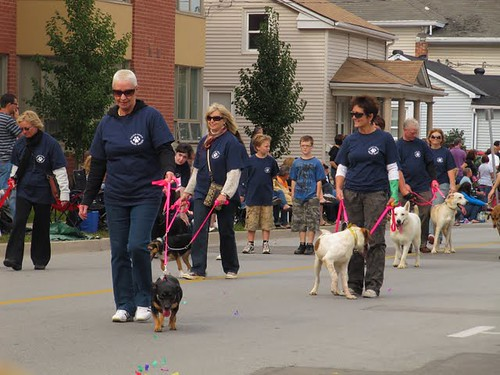 58th Annual Pen Centre Grande Parade - Hondjes uit het hondenasiel - klaar voor adoptie
