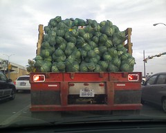 stuck behind a cabbage truck