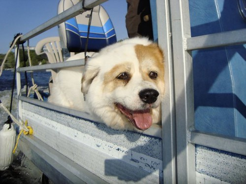 Abby on a pontoon boat