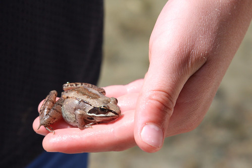 A Frog In The Hand...