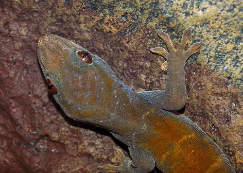 Gecko Walk