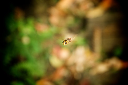 Hiking on the same trails, this big bee hovered completely still for about 3 minutes to check me out.