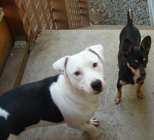 Nelli and Elton