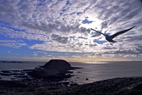 The Rocks, Philip Island, Victoria