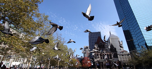 Pigeons at Copley Square II
