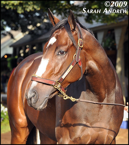 Portrait of Rachel Alexandra