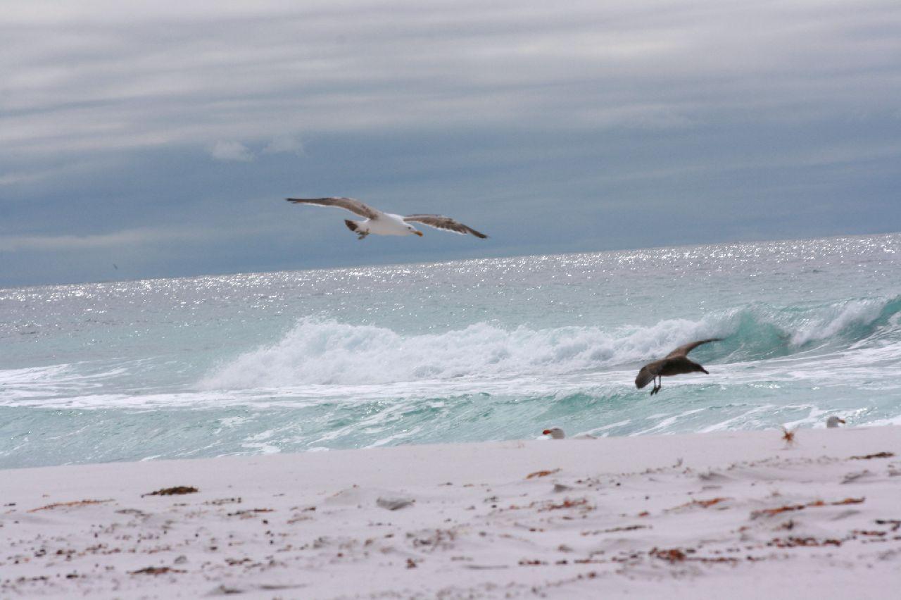 Birds, Sea, Sky