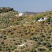 Walk from Canillas de Albaida to Salares